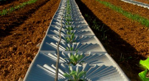 Tal-Ya Water Technologies (Tal means dew in Hebrew) developed reusable plastic trays to collect dew from the air, reducing the water needed by crops or trees by up to 50 percent. (photo from israel21c.org)